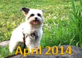 Pet Events April 2014