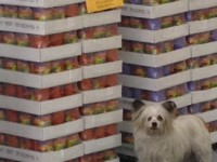 Great-Life-Pet-Food-Northland-Warehouse-3