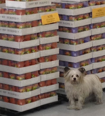 Great Life Pet Food Northland Warehouse 3