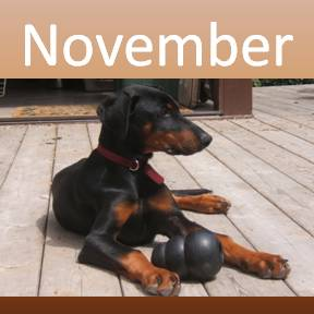 November Pet Events Minneapolis Minneasota